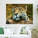Lonely Tiger  Art Poster Print  24x18 inch