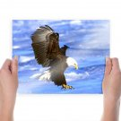 Bald Eagle  Art Poster Print  24x18 inch