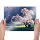Japanese Cherry Blossoms  Art Poster Print  24x18 inch