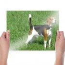 Lovely Beagle S Art Poster Print  24x18 inch