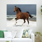 Majestic Brown Horse  Art Poster Print  24x18 inch