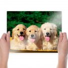 Bath Time Golden Retriever Puppies  Art Poster Print  24x18 inch
