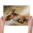 Tiger Family  Art Poster Print  24x18 inch