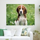 Beagle Playing S Art Poster Print  24x18 inch