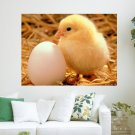 Spring Chicken  Art Poster Print  24x18 inch