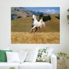 Beautiful White Horse S Art Poster Print  24x18 inch