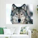 Winter Wolf  Art Poster Print  24x18 inch