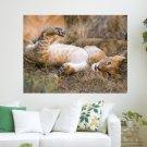 African Lion Masai Mara National Reserve  Art Poster Print  24x18 inch