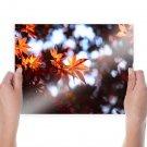 Beautiful Leaves  Art Poster Print  24x18 inch