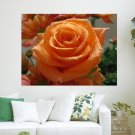 Bright Coloured Rose  Art Poster Print  24x18 inch