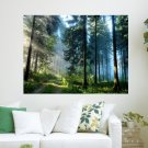 Pine Forest Path  Art Poster Print  24x18 inch