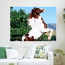 Pinto Horse  Art Poster Print  24x18 inch