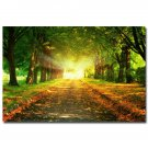 Morning Sunrise Forest Path Nature Poster Trees 32x24