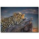 Cute Leopard Africa Wild Animals Poster 32x24