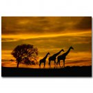 Giraffe Wild Animals Africa Sunset Landscape Art Poster 32x24