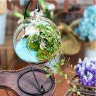 Ball pattern Hanging Glass Vase Micro Landscape!