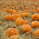 Pumpkin Spice - Glycerin Soap