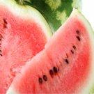Classic Watermelon Lip Gloss