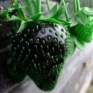 Black Strawberry Seeds Fruit Seeds 100 Seeds db