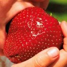 Giant Strawberry Seeds Fruit Seeds 150 Seeds