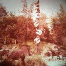 Disneyland 35mm LOST SAFARI Adventureland Souvenir Slide PANA-VUE (Vintage) VP31A2