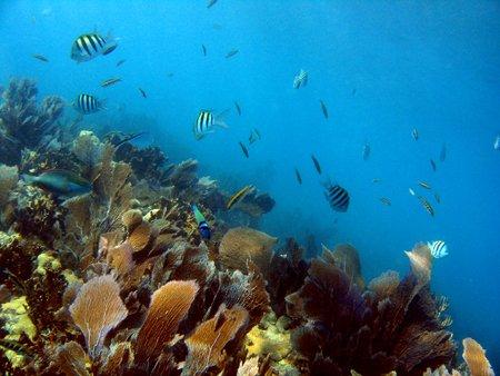 Dry Rocks Reef