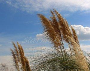 Breezy - Original Fine Art Photography