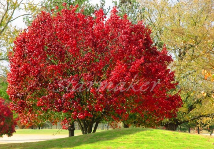 Fire Tree - Original Fine Art Photography