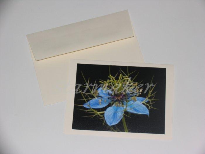 Soft Thorns - Original Award Winning Fine Art Photograph Notecard