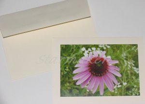 Coneflower - Original Fine Art Photograph Notecard