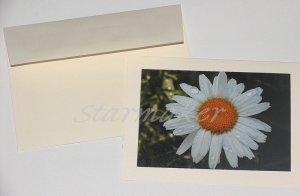 Daisy After the Rain - Original Fine Art Photograph Notecard
