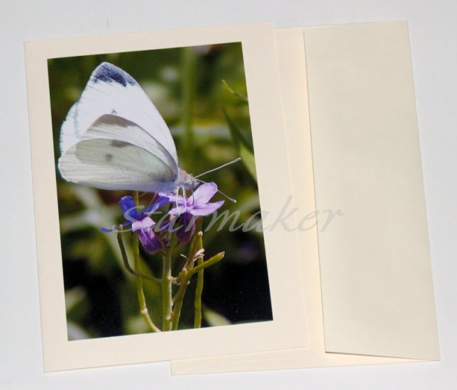 White Butterfly - Original Fine Art Photograph on Notecard