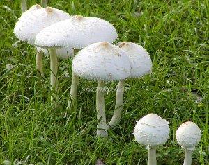 Mushroom Family - Original Fine Art Photograph