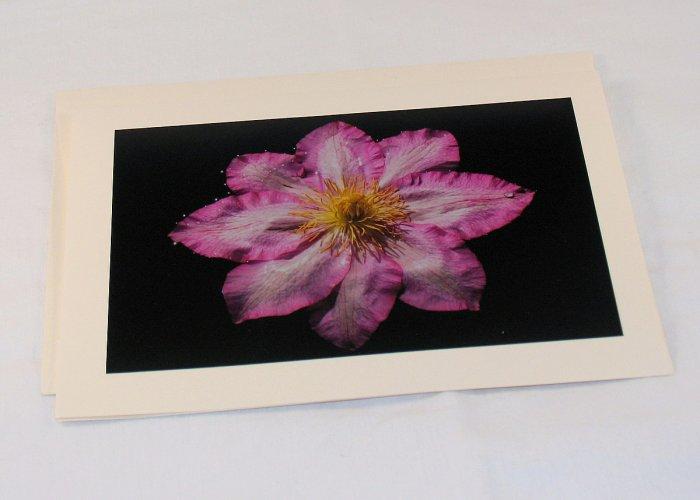 Clematis 2 - Original Fine Art Photograph Photocard