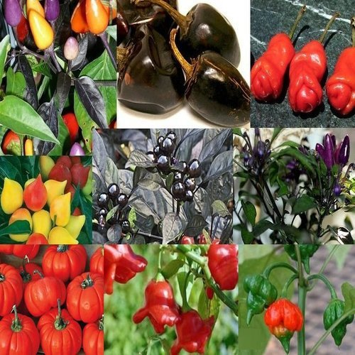 Rare Peppers Mix (20 Unique Seeds)