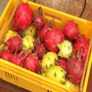 Dragon Fruit (50 Mixed Pitaya Seeds)
