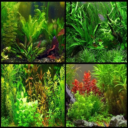 Mixed Aquatic Plants (5 Cuttings)