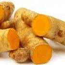 10xSMALL Turmeric RHIZOMES Herb Plant Culinary Curcuma Longa Curcumin Spice