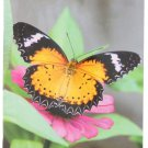 2016-2017 2 Year Monthly Planner - Butterflies