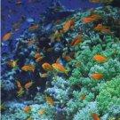 Ocean Colors 2017-2018 2 Year Pocket Planner