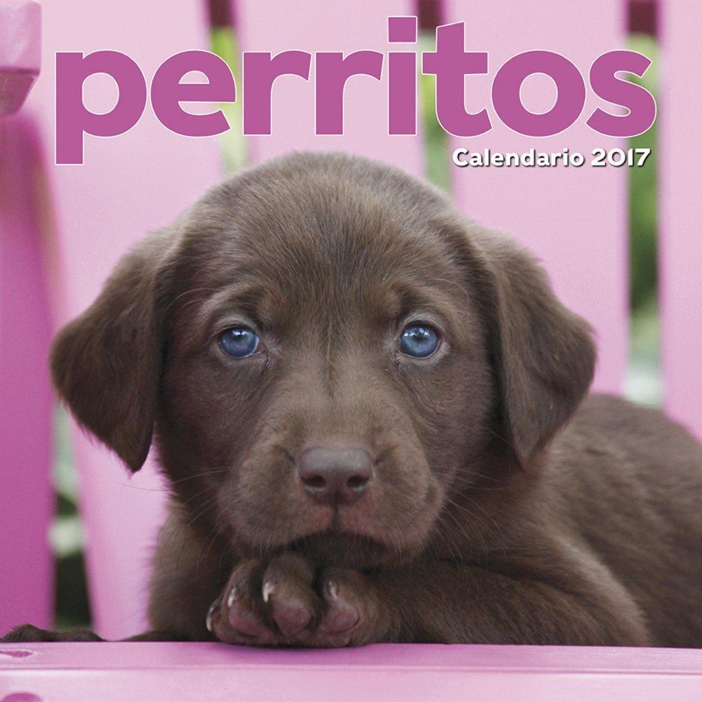 Perritos Puppies Spanish 2017 16 Month Wall Calendar 12x12