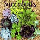 Succulents - 16 Month 2018 Wall Calendars