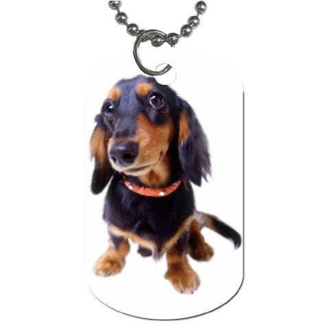 Dachshund  Dog Tag Necklace Chain - 12099481