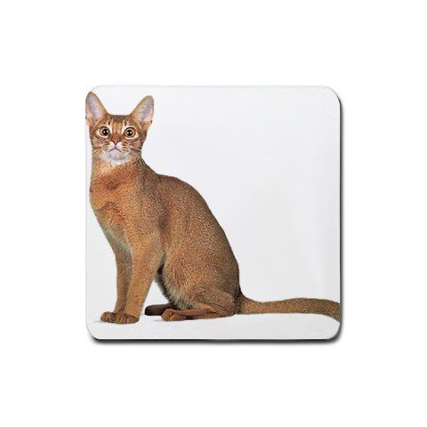 Abyssinian Cat Pet Lover  Rubber Square Coaster 4 pack 12168391