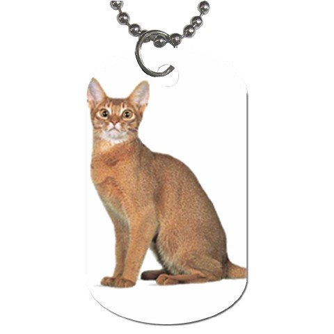Abyssinian Cat Pet Lover Dog Tag Necklace Chain 12168407