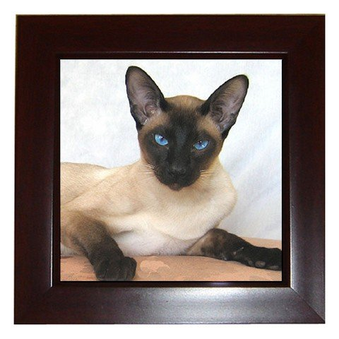 Siamese Cat Pet Lover Framed Tile Picture 12203164
