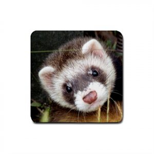 Ferret Lover Rubber Square Coaster 4 pack 17473602