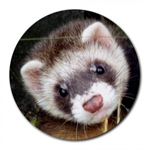 Ferret Pet Lover  Round Mousepad 17473593