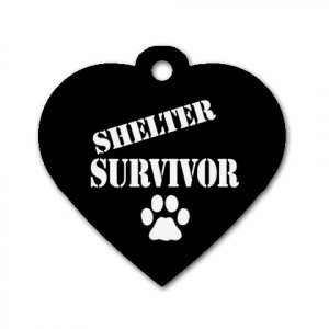 Heart Shape SHELTER SURVIVOR Dog Tag or Necklace Jewelry or Pet Collar Tag 23305783