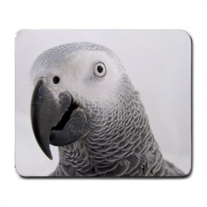 AFRICAN GREY Bird  Pet Lover  Large Mousepad 17476840